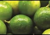 Revitalizing             Lime