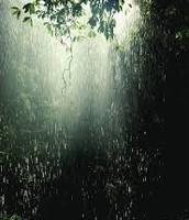 The precipitation