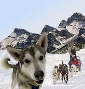 http://www.bookxtra.com/images_xtrainfo/8cab8f84-bfad-4bea-a122-008b8d2708dekingmik_dog_lg.jpg