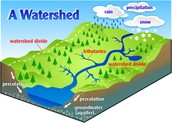 A River Watershed Diagram