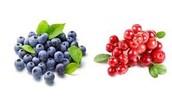 Classification of Bilberries
