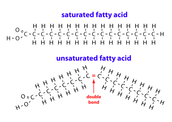Fatty Acids (Monomer)