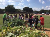 Real School Gardens works with our learners and educators