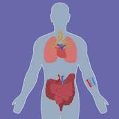 גוף האדם כמערכת על: