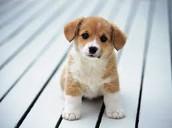 Jean's puppy