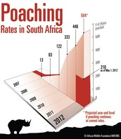 A scale of rhino poaching