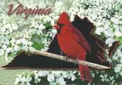 State bird: Cardinal