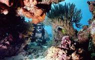 Coral in Brunei