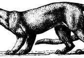 Giant Fossa: Extinct