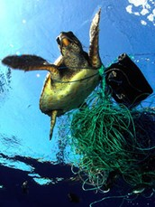 Effects of Ocean Pollution