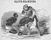Salves were branded