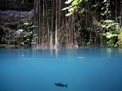Black catfish in the blue pool