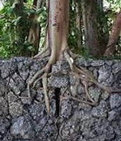 Plants Roots - Mechanical