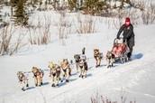 http://www.adn.com/sites/default/files/styles/ad_slideshow_normal/public/Iditarod-2013-Koyuk-21.jpg?itok=T9LvYGab