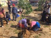 בניית גינה קהילתית