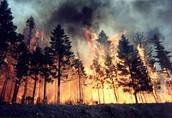 wild fires