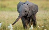 Save the elephants!!!