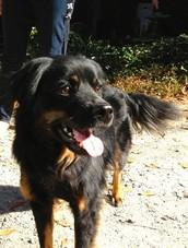 Jasper the Friendly Dog Needs a New Home Due to Family Illness ATLANTA GA, USA
