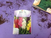 Information on plants