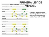 Aportaciones de Mendel a la genetica