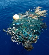 We Throw Waste Into the Ocean