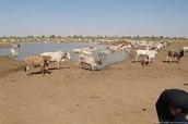 Animals In Sahel