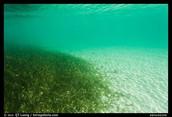 Sea Grass Bed