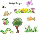 What living things carry on the process of cellular respiration?
