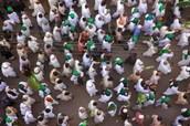 Maw lid al-Nabi