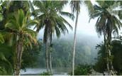 Indio Maiz Biological Reserve!