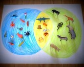 Ocean and land animals