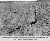 Droughts affected farms badly