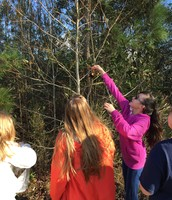 NEHS students hanging pinecone birdfeeders outside on campus