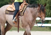 Horse back riding is dangerous sport here are some tips: