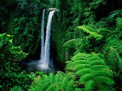 Image of a Tropical Rainforest