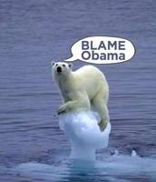 Polar Bears Dont Have Enough Ice