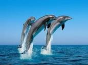 dolphin pumps aquarium