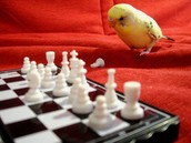 Pensive Parakeet - What is the next move with ESSA?