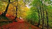 Bosque caducifolio: