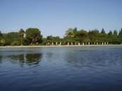 Lago de parque