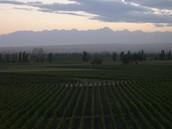 Mendoze Wine Regions