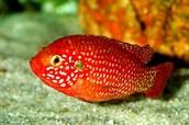 מיון בעלי חיים- מחלקת הדגים