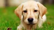 Animal Favarito: Perro