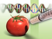 What is a Genetically Modified Food?