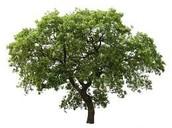Symbol 2: Trees