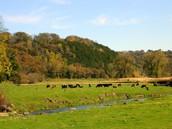 Farmland & Prairies
