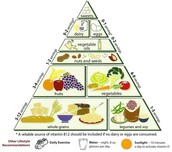 The food pyramid of pescaterien