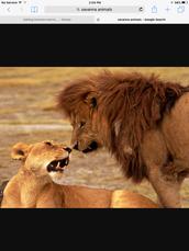 The big animals