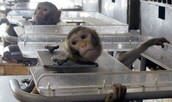 8. Over 115 million animals – mice, rats, dogs, cats, rabbits, monkeys, birds, among others – are killed in laboratory experiments worldwide for chemical, drug, food, and cosmetics testing every year.