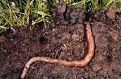 Soil to Earthworm